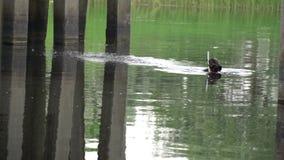 De kerel in de aqualong komt onder de brug te voorschijn stock footage