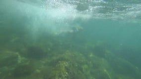 De kerel duikt onder het water stock videobeelden
