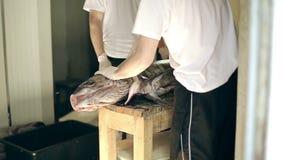 De kerels van de vissenproductie ontkleden een lichaam van grote zwaardvissen schoon van huid maken filet stock footage