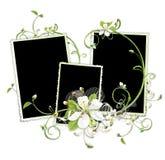 De kers bloeit frame vector illustratie