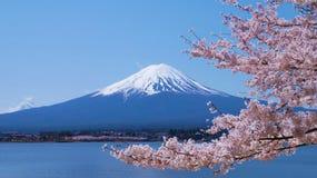 De kers-bloesems en zetten Fuji op die van Laka Kawaguchiko in Yamanashi, Japan worden bekeken Royalty-vrije Stock Fotografie