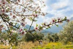 De kers komt de eerste dag van de lente tot bloei stock fotografie