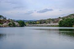De kers komt rond de Vijver van Takamatsu in het Park van Takamatsu, Morioka, Iwate, Tohoku, Japan in de lente tot bloei Selectie stock afbeeldingen