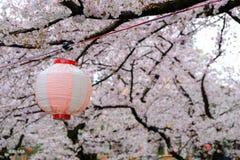 De kers komt tot bloei en Sakura Festival-lantaarns langs Shingashi-Rivier, Kawagoe, Saitama, Japan in de lente Stock Afbeeldingen