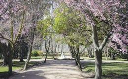 De kers komt, Tuinen van de stad van Aranjuez tot bloei, in Kuuroord wordt gevestigd dat Stock Afbeeldingen