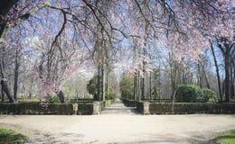 De kers komt, Tuinen van de stad van Aranjuez tot bloei, in Kuuroord wordt gevestigd dat Royalty-vrije Stock Foto's