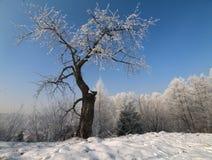 De kersenboom royalty-vrije stock afbeeldingen