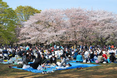 De kersenseizoen van de bloesem in Tokyo Royalty-vrije Stock Foto