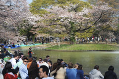 De kersenseizoen van de bloesem in Tokyo Royalty-vrije Stock Afbeeldingen