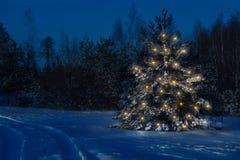 De kerstboom in het bos komt duidelijk duidelijk uit tegen stock afbeelding