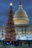 De Kerstboom van het Capitool van de V.S. Stock Foto's