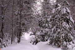 De Kerstboom van de de winteraard in de sneeuw Stock Afbeeldingen