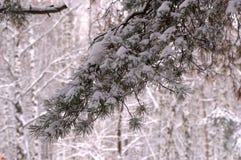 De Kerstboom van de de winteraard in de sneeuw Royalty-vrije Stock Fotografie