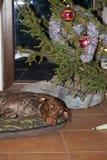 De kerstboom zou moeten worden gecontroleerd Stock Foto