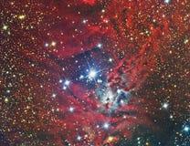 De Kerstboomcluster en Nevel van NGC 2264 Stock Afbeeldingen