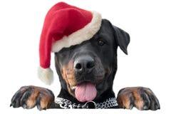 De Kerstman Rottweiler van de tribune Royalty-vrije Stock Fotografie