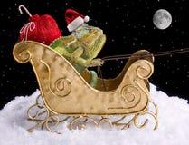 De Kerstman van het kameleon Stock Fotografie