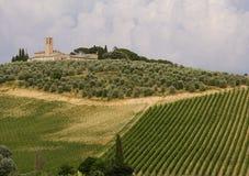 De keurige wijngaard van Toscanië royalty-vrije stock foto