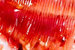 De kieuwen van snoekenvissen Super macro stock afbeeldingen