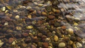 De kiezelsteen in de ondiepe wateren en het transparante water stock video