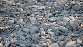 De kiezelstenen op het strand sluiten omhoog stock videobeelden