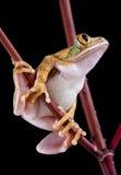 De kikker die van de boom omhoog eruit ziet royalty-vrije stock fotografie