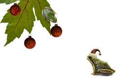 De Kikker die van de kerstboom omhoog aan Een andere Kikker kijkt Royalty-vrije Stock Afbeelding