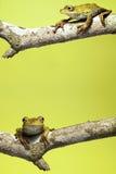 De kikker gele achtergrond van de boom met exemplaarruimte Royalty-vrije Stock Afbeelding