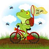 De kikker op een fiets vangt vliegen Stock Afbeelding