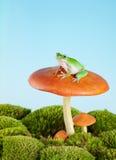 De kikker van de boom op giftige paddestoel Stock Fotografie