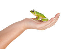 De kikker van de prins op haar hand Stock Foto