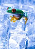 De kikker van het ijs stock afbeeldingen