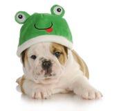 De kikker van het puppy Stock Foto's