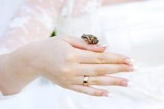 De kikker zit op een hand van de bruid Royalty-vrije Stock Fotografie