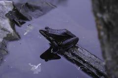 De kikker zit op een stuk van plastic afval royalty-vrije stock afbeelding