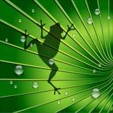 De kikkerschaduw is op Groene Tone Leaf Royalty-vrije Stock Afbeeldingen
