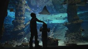 De kinderen in aquarium, kleine jonge geitjesjongens zien onderwaterwereld die van vissen en pijlstaartroggen in grote oceanarium stock video