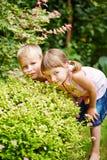 De kinderen die huid spelen - en - zoeken in tuin Stock Foto's