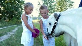 De kinderen, een jongen en een meisje van zeven jaar, voedden een witte poney, geven om wortelen te eten Vrolijke, gelukkige fami stock videobeelden
