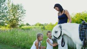 De kinderen, een jongen en een meisje van zeven jaar, voedden een witte poney, geven om wortelen te eten Vrolijke, gelukkige fami stock video