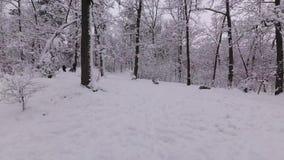 De kinderen gaan onderaan een Sneeuw Hilll stock footage