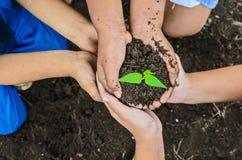 De kinderen overhandigen en boom Stock Foto