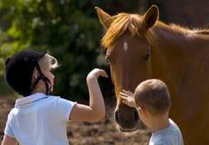 De kinderen raken paard Stock Foto's