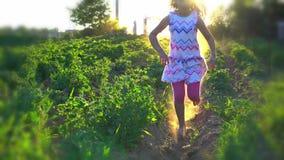 De kinderen spelen de achterstand inlopen Kinderen die op landelijk aardappelsgebied lopen stock footage