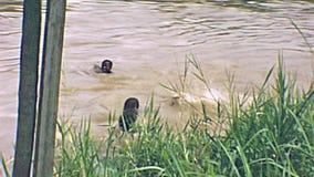 De kinderen van Nigeria het zwemmen stock footage