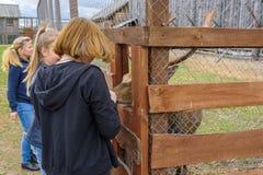 De kinderen voeden de herten in een kooi van de handen Rusland, Suzdal, September 2017 stock foto's