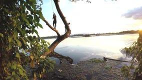 De kinderen werpen zich in meerwater van boom stock video