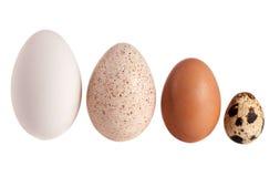 De kip en de kwartelseieren van gansturkije op witte achtergrond worden geïsoleerd die Knippende weg Royalty-vrije Stock Fotografie