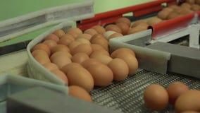 De kip van de eifabriek verpakking stock footage