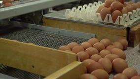 De kip van de eifabriek verpakking stock video